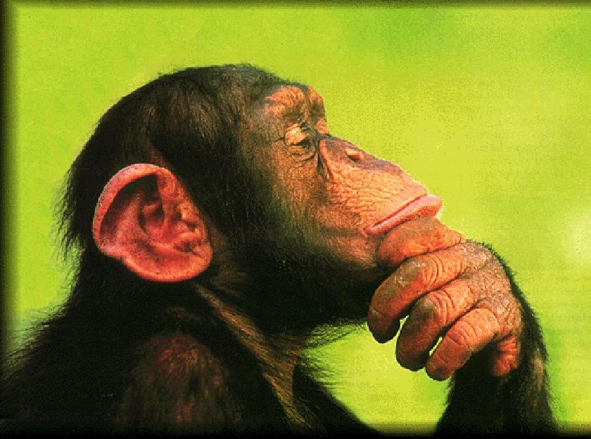 urban-chimp3